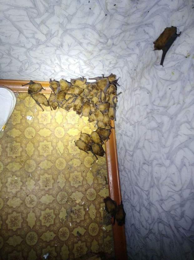 летючі миші Київ балкон