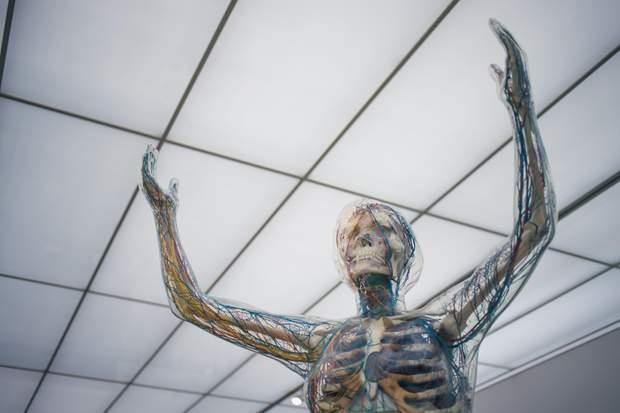 Людина можна жити без п'яти органів
