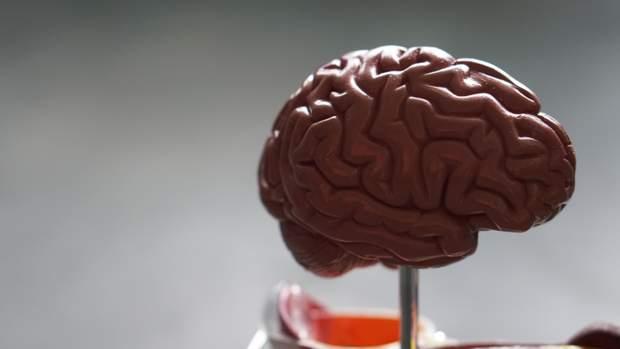 Знайшли ділянку в мозку, яка робить людей тривожними