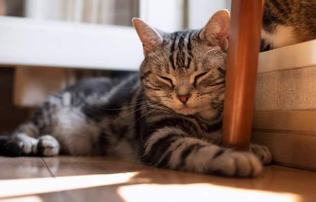Нехай кішка першої переступить поріг оселі
