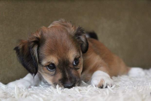 У Кропивницькому 130 собак можуть викинути з притулку через брак коштів