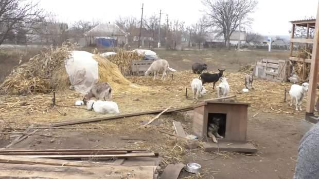 Тварини радо зустрічають дітей
