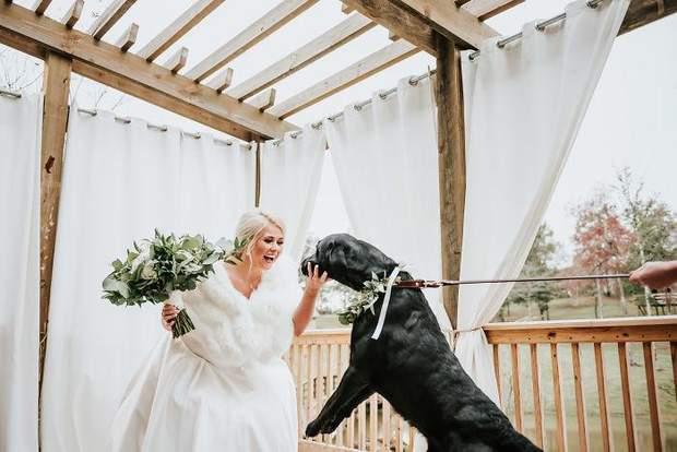 Фотосесія нареченої з лабрадором
