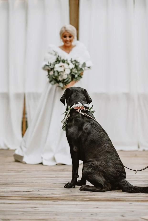 Погляд між собакою та нареченою був особливим