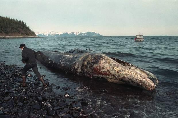 аварія танкер витік нафти кит