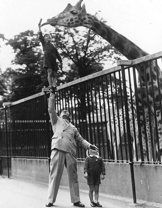 Дитина в зоопарку