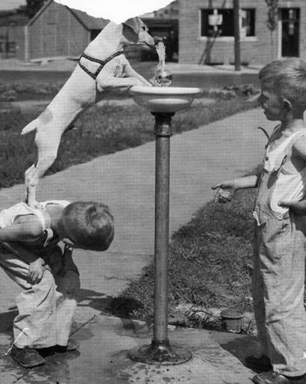 Діти з собакою