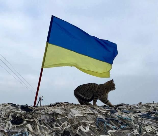 ЗСУ кіт війна з Росією