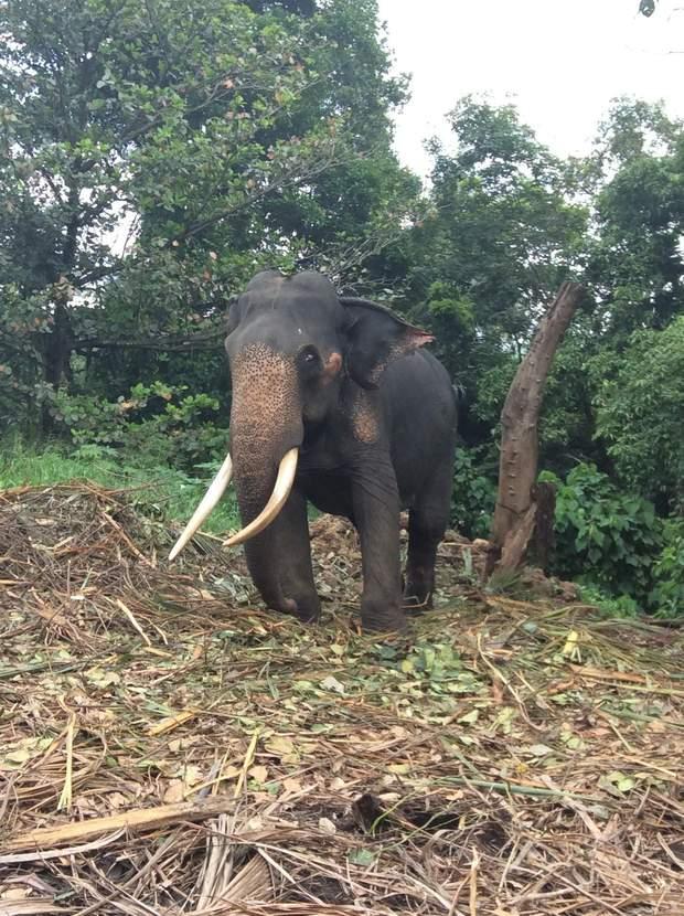 шрі-ланка слони вбивтсво