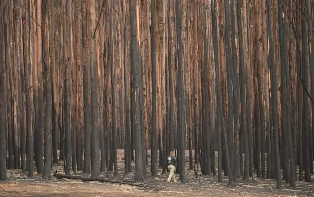 австралія дощі зливи пожежі
