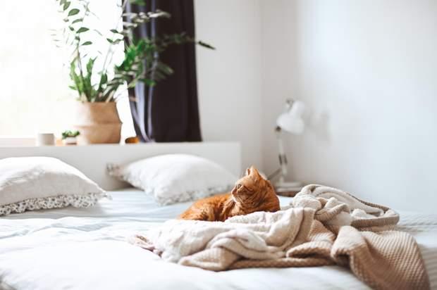 Клопи в ліжку можуть бути у всіх країнах світу