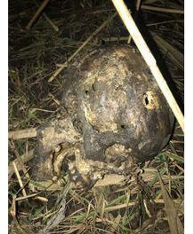 скелет труп