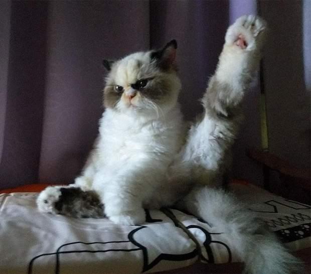 кішка мем злий кіт