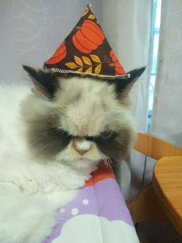 зла кішка мем кіт киця