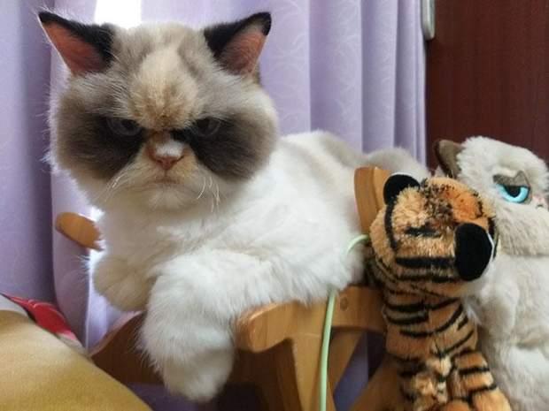 кішка мем мяу-мяу злий кіт