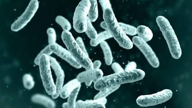 Чума – це бактеріальне захворювання