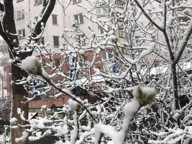 Сніг у Києві 22 березня