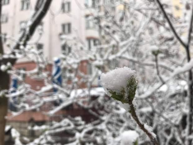 Сніг у столиці 22 березня