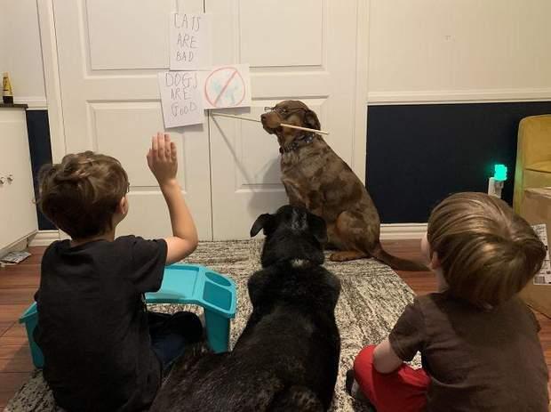 Коли вчителем стає собака, бо мамі треба працювати