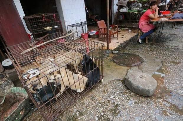 Ринки з дикими тваринами в Китаї