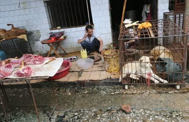 Влада раніше заборонила їсти диких тварин