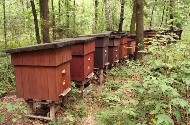 пасіка мед бджоли бджільництво
