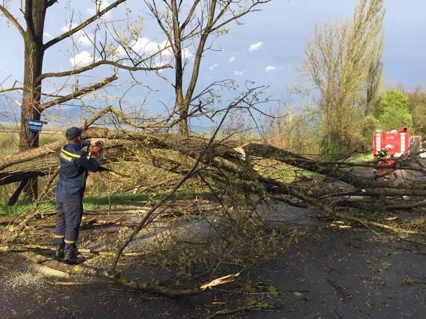 Непогода на Закарпатье: повалены деревья и обесточены села – видео, фото