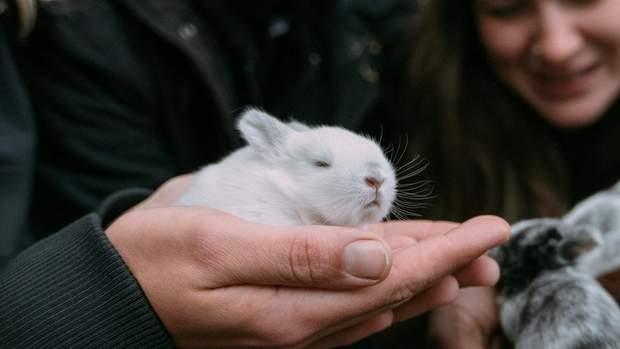 Тестування на кроликах