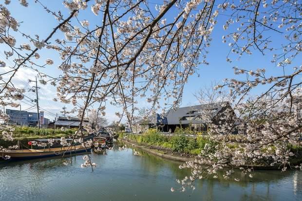 Місце розташування будинку – вишневі сади / фото: Archdaily