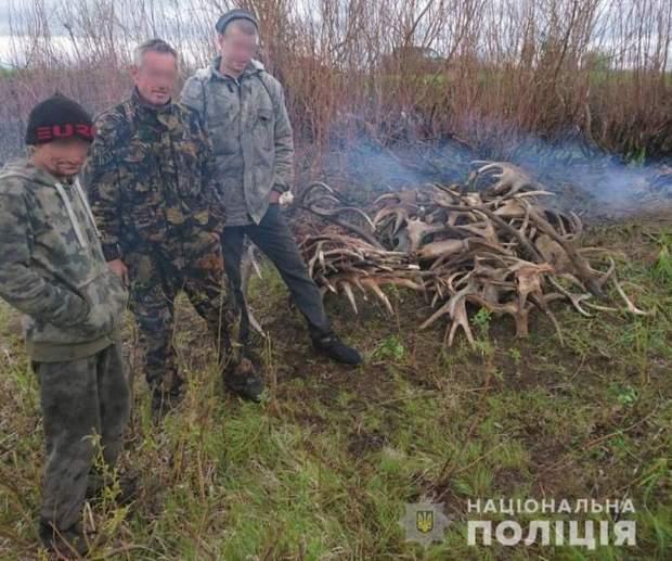 60 килограммов лосячих рогов пытались вывезти из Чернобыльской зоны: фото