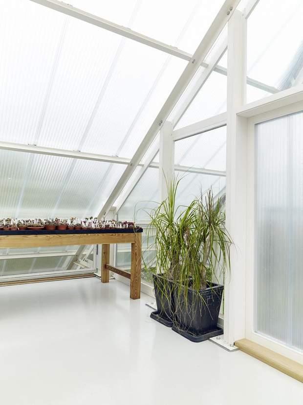 В парнику ростуть не тільки кактуси / фото: Archdaily