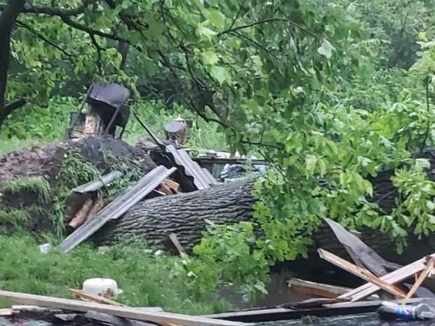 дерево впало на будинок і вбило жінку в Брюховичах