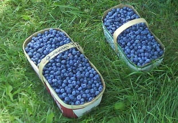 Обвал за обвалом: в Украине стремительно дешевеют ягоды