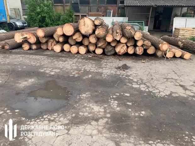 незаконная вырубка леса, расследование