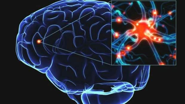Нейрони в мозку
