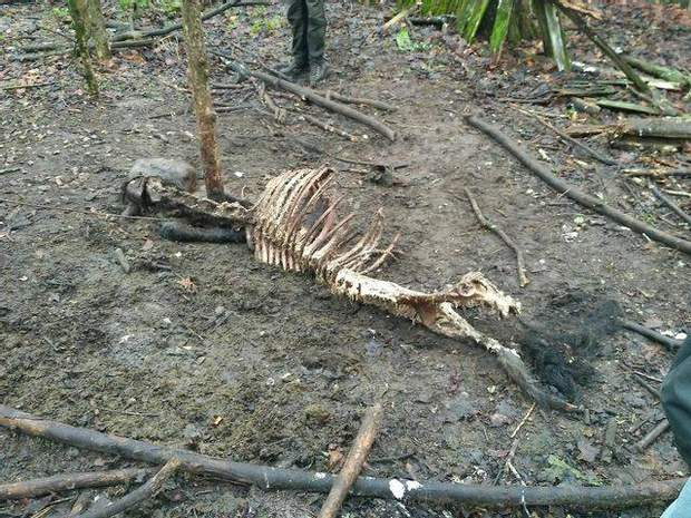 коні Пржевальського гинуть у Чорнобильській зоні