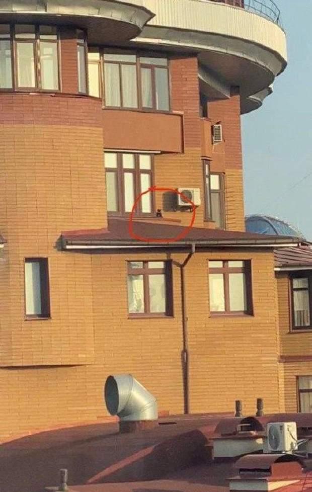 Кіт у Києві сидів на 23 поверсі багатоповерхівки