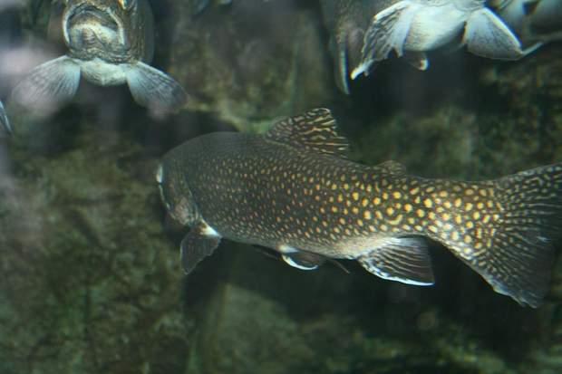 Наркотики впливають на риб