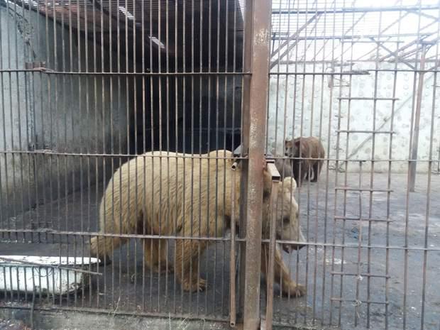 У Хмельницькому незаконно утримують тварин