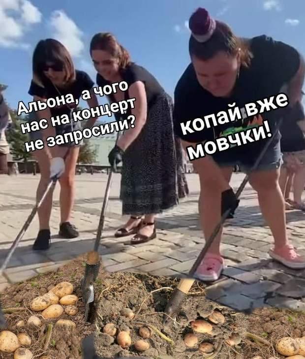 Скандал Альона картопля