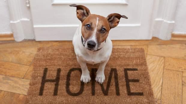 Знайомство собаки з новим домом