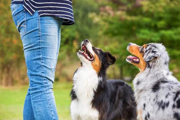 Тренування собак