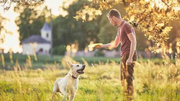 Ігри з собаками