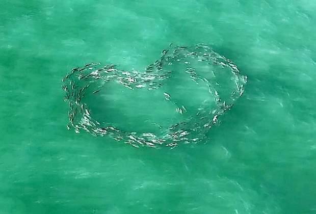 Фото риб у вигляді серця