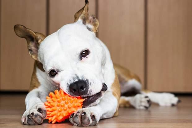 Іграшки для собаки