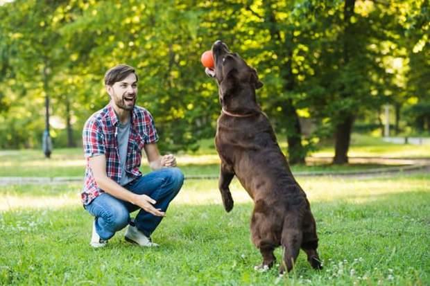 Тренування собаки