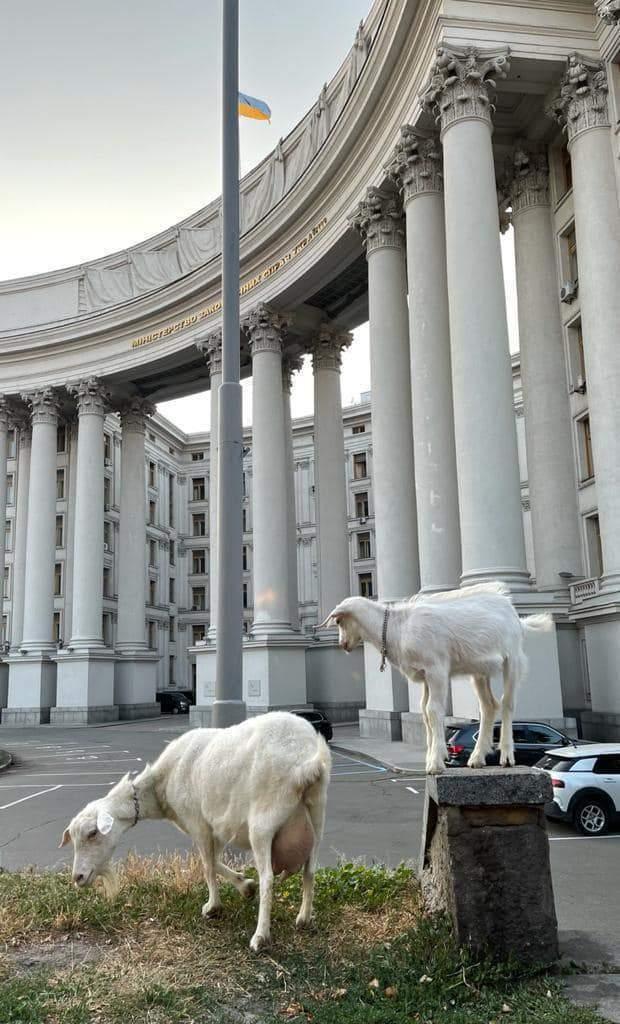 Кози паслися біля будівлі МЗС