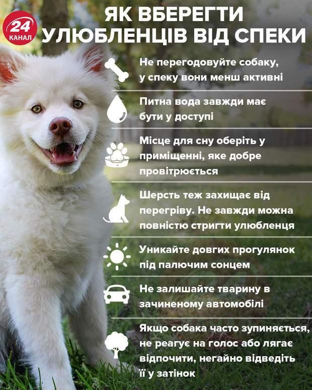 Домашні тварини і спека