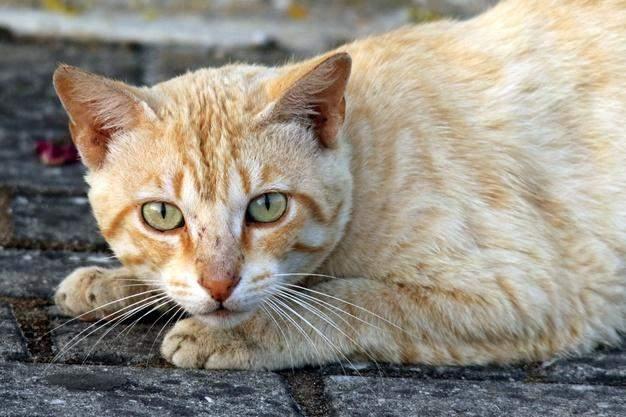 Коты имеют усы не только на морде, но и на лапах