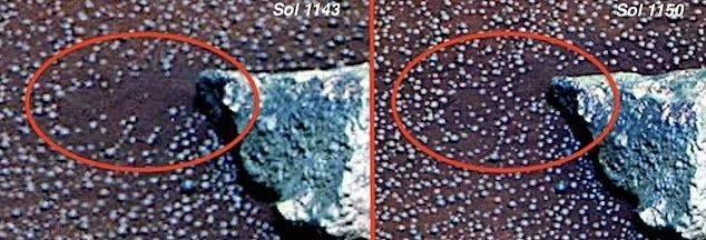Гриби на Марсі